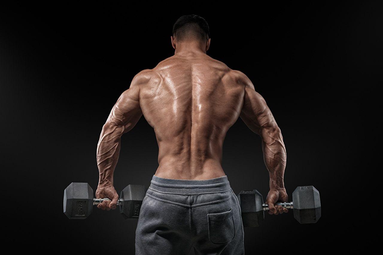 Как правильно накачать мышцы? Питание